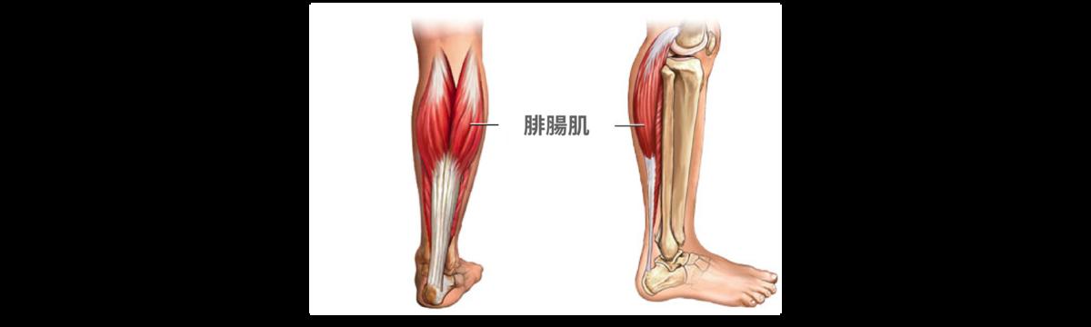 瘦小腿肌肉